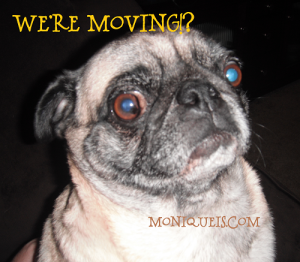 Funny Pug Picture | Moniqueis.com