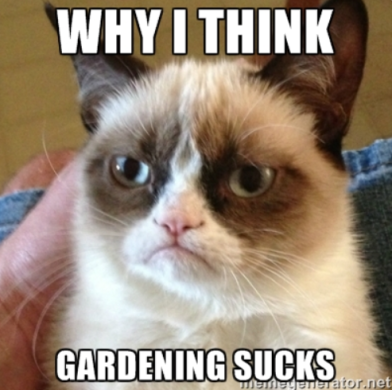why i think gardening sucks grumpy cat